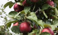 appelplukdag-2015-9.jpg