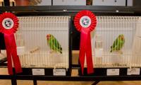 vogelshow_06.jpg