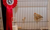 vogelshow_08.jpg